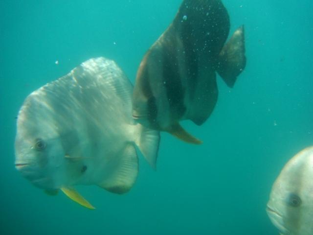 Mergulhando na Grande Barreira de Coral