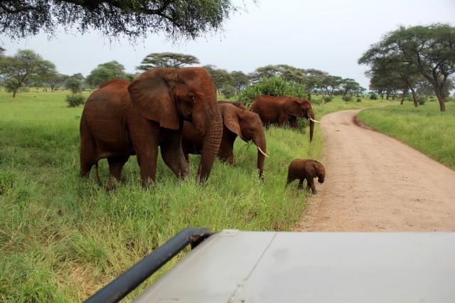 Família de elefantes a alguns metros do carro