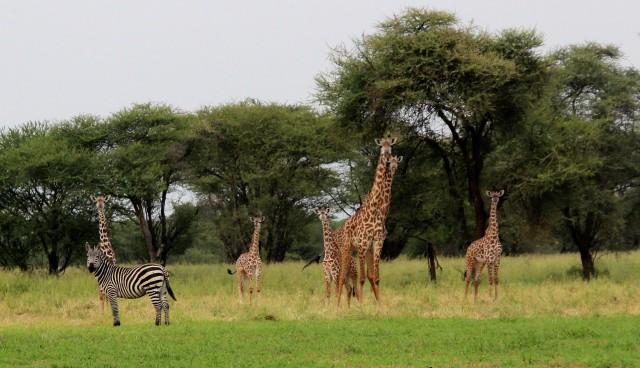 Cena do filme Madagascar