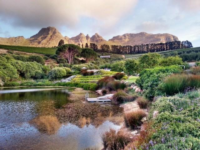 Cenário da vinícola em Cape Town
