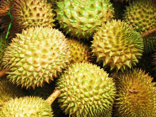 Durian por fora, casca espinhenta