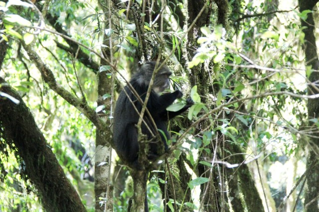 1a zona climática do Kili: floresta tropical