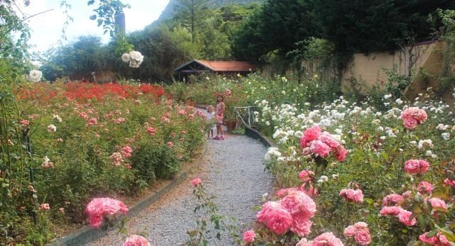 Lindo roseiral que conhecemos na Quinta do Arco