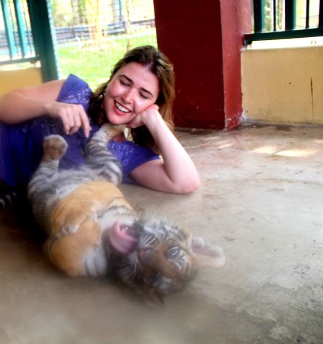 Brincando com filhotes de tigres na Tailândia