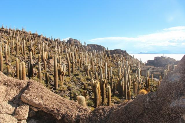 Floresta de cactos em Incahuasi