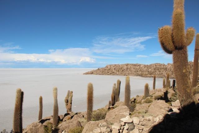 A Isla Incahuasi e sua floresta de cactos