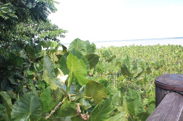 Vegetação típica do Mangal das Garças
