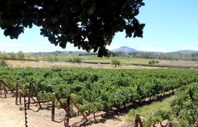 Conhecendo as vinícolas da África do Sul