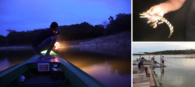 Barco na focagem noturna do jacaré, jacaré filhote e pesca de piranha.