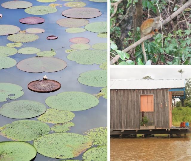 Vitórias-régias, macaco e comunidades ribeirinhas no passeio encontro-das-águas
