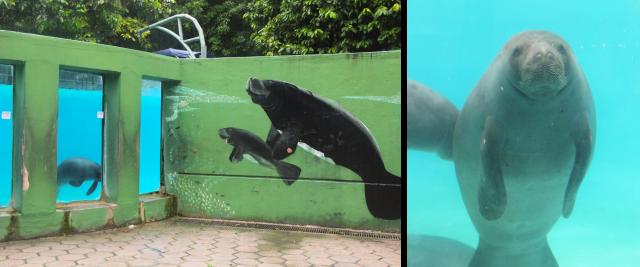 Aquário peixe-boi Bosque da Ciência (INPA)