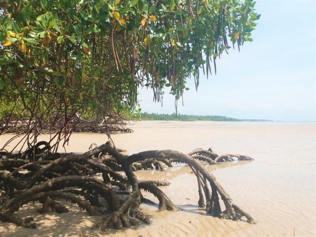 quinta-praia